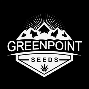 GreenPoint Seeds - Hickok Haze