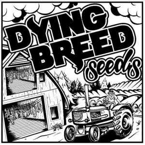 Dying Breed Seeds - Red Roze